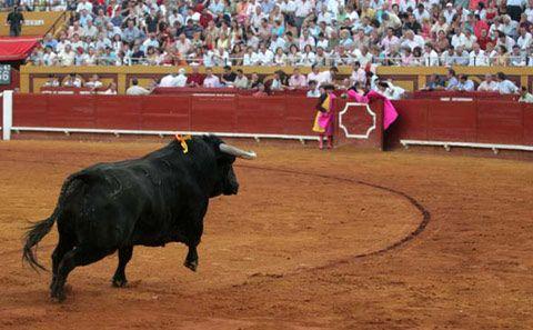 CARTELES Padilla, Fandi, Hermoso, Ventura,Andy.... Morante, Manzanares y Talavante, cartel estrella de Algeciras - Mundotoro.com #toros #toreros