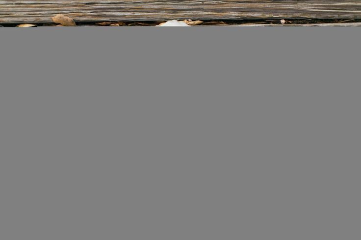 Stationery: Parklife Press - http://www.stylemepretty.com/portfolio/parklife-press Photography: The Grovers - http://www.stylemepretty.com/portfolio/the-grovers   Read More on SMP: http://www.stylemepretty.com/california-weddings/2015/07/03/romantic-summer-wedding-at-rancho-valencia/