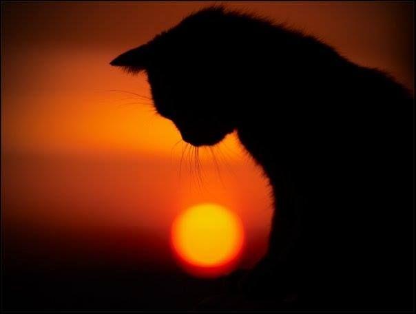 Дзен — Его Величество Кот