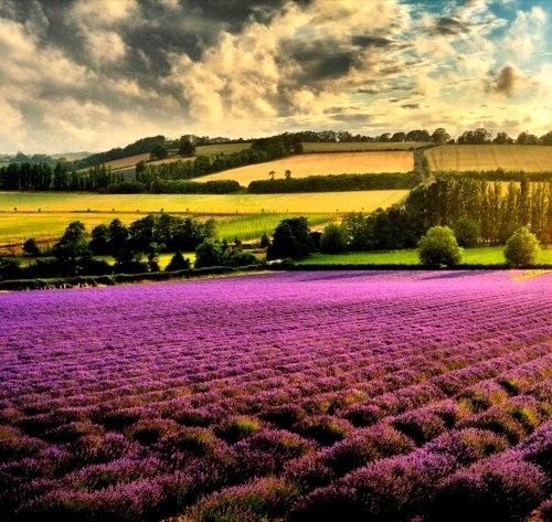 the beautiful light of Provence