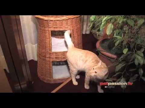 Comportamento gatti:   Arredare casa per un gatto