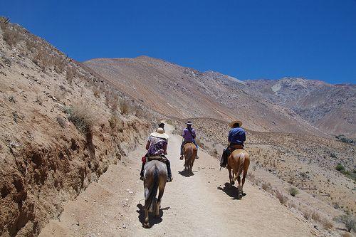 Pisco Elqui, Región de Coquimbo, Chile