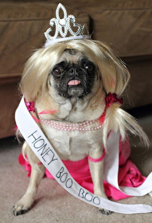 hilarious honey boo boo pug nailed it dog costumeshalloween - Pugs Halloween Costumes