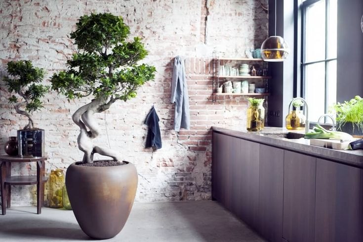 S'entourer de belles plantes : le Ficus Ginseng - FrenchyFancy