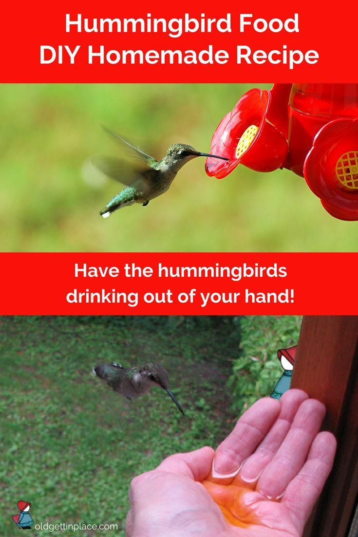 Free Hummingbird Nectar Recipe Easy And Cheap Hummingbird