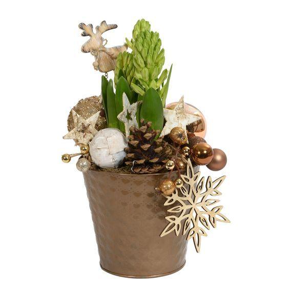 Jacinthe de Noël - Jacinthe de Noël - On trouve facilement des jacinthes à partir de 1,50 euros. Ensuite, il suffit d'avoir un gros bol à céréales, un peu de mousse des bois ou du jardin, quelques pommes de pin et des petites décorations comme des mini-boules de Noël, des petits anges ou des elfes. On les trouvent généralement au fond du carton à décoration ou sur les étagères à bibelots. C'est simple, amusant, surtout avec des enfants, de préparer ses jacinthes de Noël soi-même - Photo…