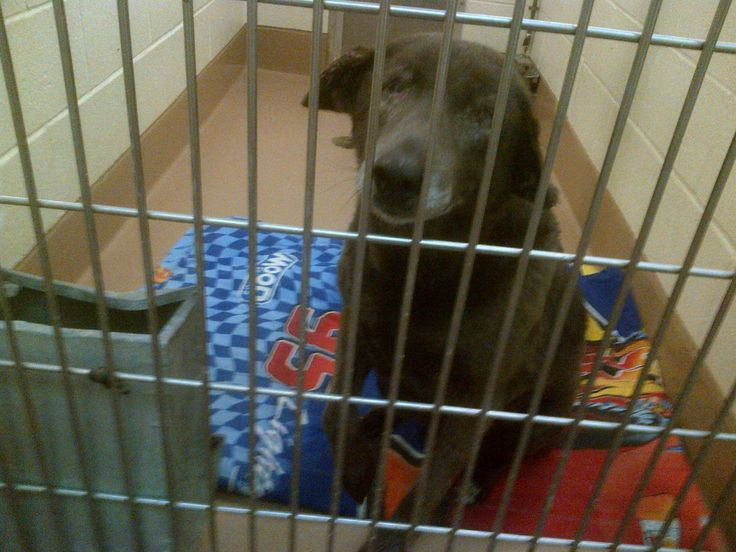 We have an URGENT plea from the Coachella Valley Shelter