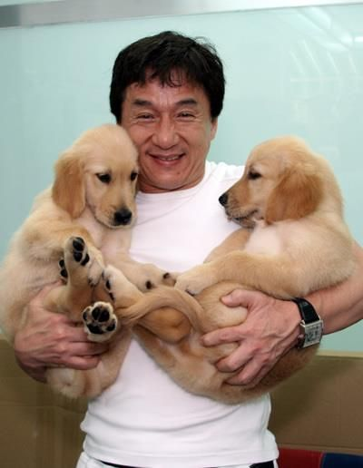 I love Jackie Chan!!Puppies, Celeb Dogs, Dogs Breeds, Famous People, Jackie Channing, Actor, Golden Retriever, Animal, Favorite People