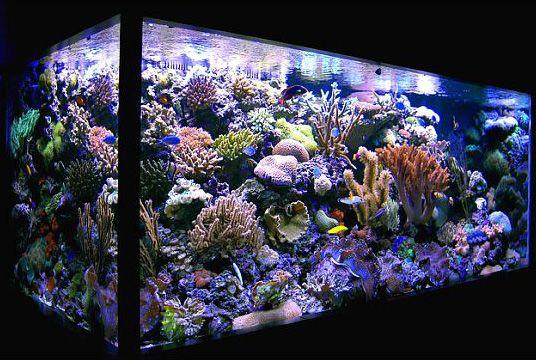 Amazing set up! Reef tank Pinterest