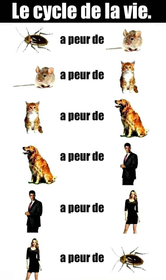 Le cycle de la vie