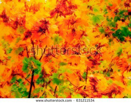 An illustration of autumn yellow leaves on a tree. Picture with tonal display