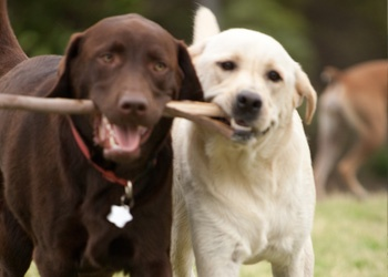 Dog walking is about getting your pup out of the house to share time with other pups, to rumble, to have fun!
