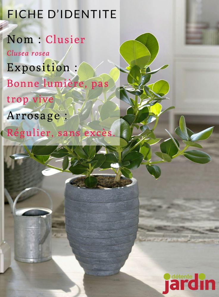 Les 240 meilleures images du tableau plantes d 39 int rieur sur pinterest plantes d 39 int rieur - Comment s appelle l arbre du kaki ...