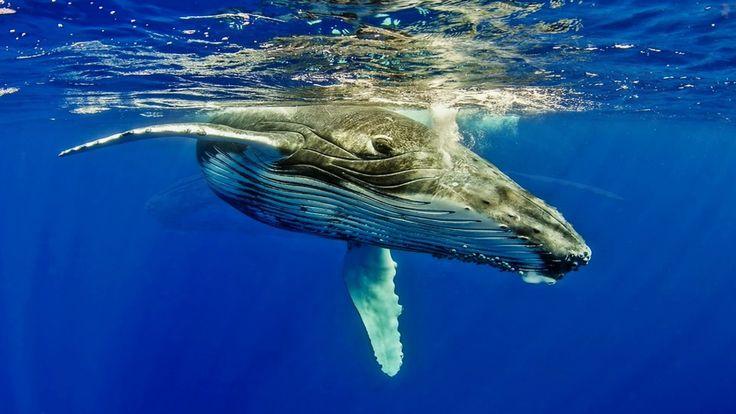 Relaxační hudba, Velrybý zvuky, Klavírní Hudba, Léčivé zvuky přírody, Me...
