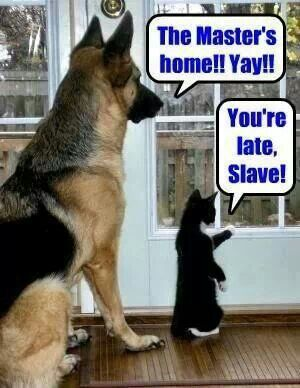 The difference between dogs and cats - doggie looks just like one of my Shepherds, Alex.