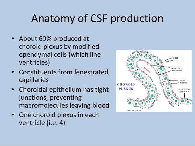 Cerebrospinal fluid (CSF) and interpreting lumbar puncture