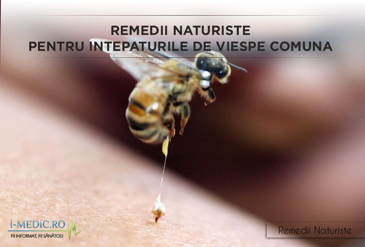 Intepaturile viespei comune sunt extrem de dureroase, persoana atacata fiind expusa riscului de aparitie a unor reactii alergice severe, datorita veninului. Din fericire exista cateva remedii naturiste eficiente pentru combaterea intepaturilor de viespe comuna. http://www.i-medic.ro/remedii/remedii-naturiste-pentru-intepaturile-de-viespe-comuna-vespula-vulgaris