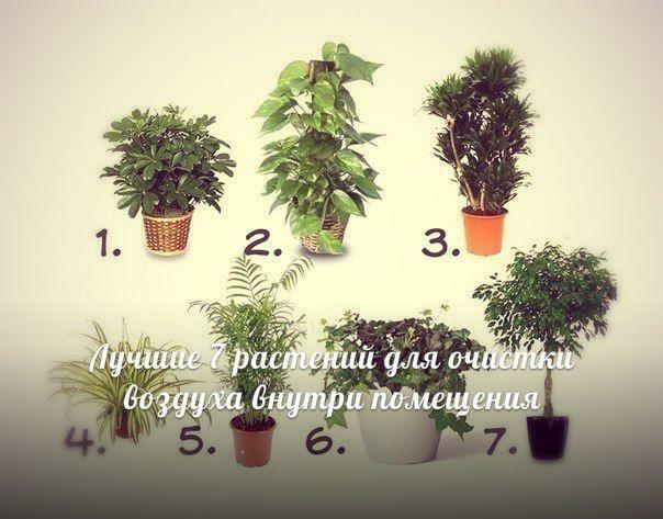 Лучшие 7 растений для очистки воздуха в доме