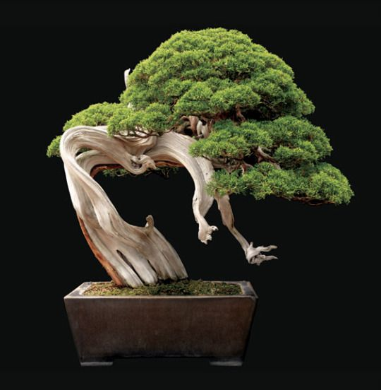 flower windows picture from spring dream seed industry co ltd about juniper bonsai tree seeds potted flowers office bonsai purify the air absorb harmful bonsai tree office window