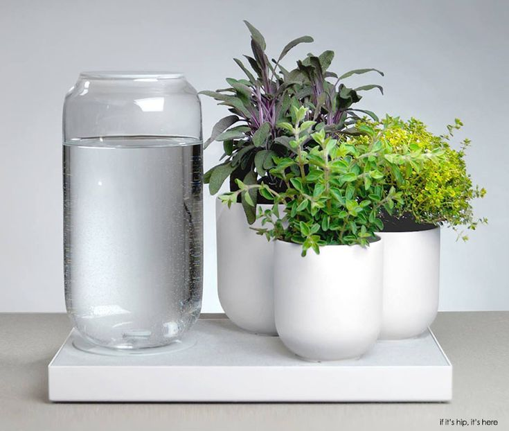 Pikaplant Products For Plant Killers. The Amsterdam Company Has Designed  Three Different Products Which Mimic · Geranium RozanneWater HouseModern ...