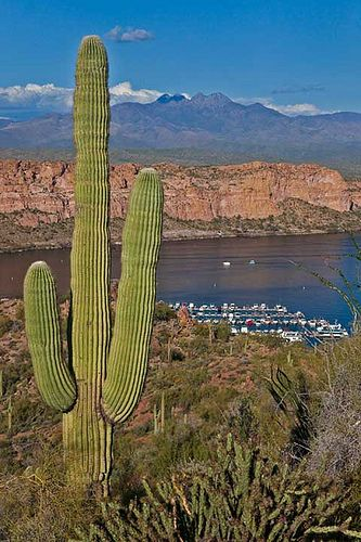 A fat saguaro above Saguaro Lake marina with Four Peaks in the background, Tonto National Forest, Arizona