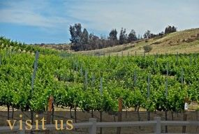 Mount Palomar Winery - Temecula Winery and Vineyard