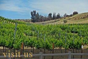 Mount Palomar Winery - Temecula Winery and Vineyard