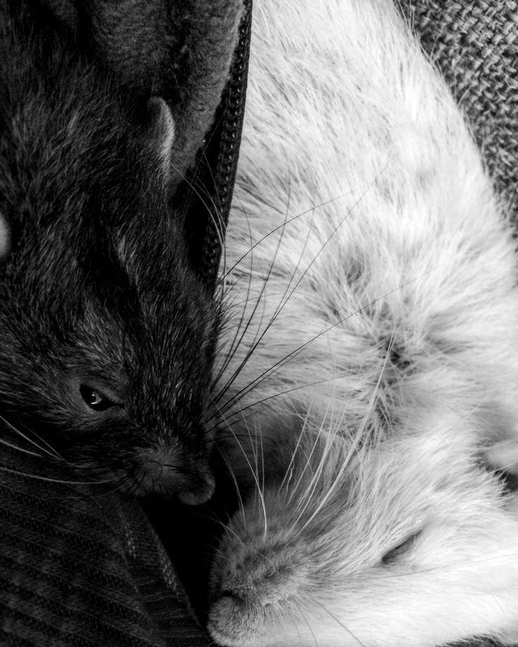Sleepy 🐀🐁