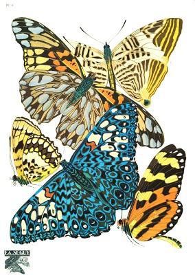 Art Nouveau Butterfly - Eugene Alain Seguy - Early XXth century