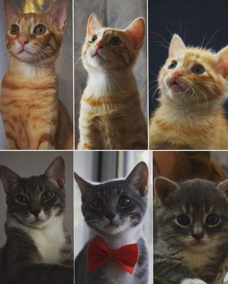 #PinkDream#CuteAnimals#Bestcats#kittencute#pandy&sandy#photography#instaphoto #Meow