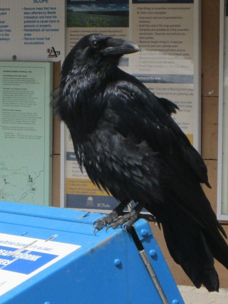 20170423 - Raven, Manning Park, BC