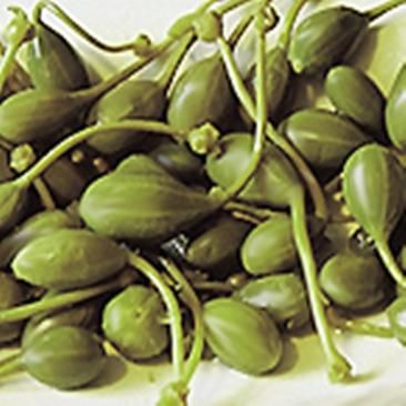 Cappero di Pantelleria ~ FRESH ITALIAN CAPERS, BEFORE BEING SALTED, DRIED AND PRESERVED.