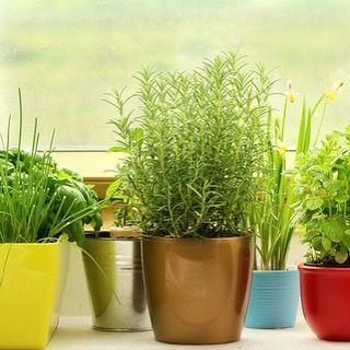 Starting an Indoor Garden #HelenaMTRealEstate http://ift.tt/2eMiksQ