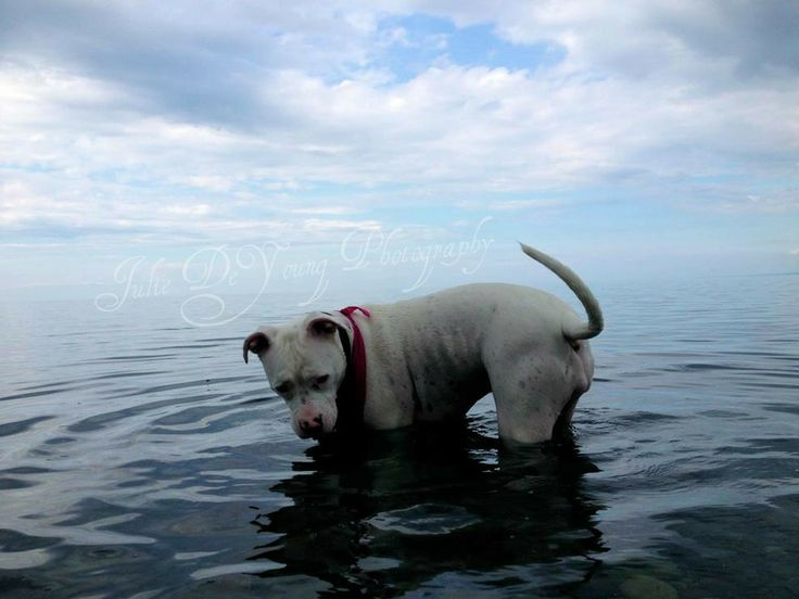 My Lulu having a swim in Cape Jack