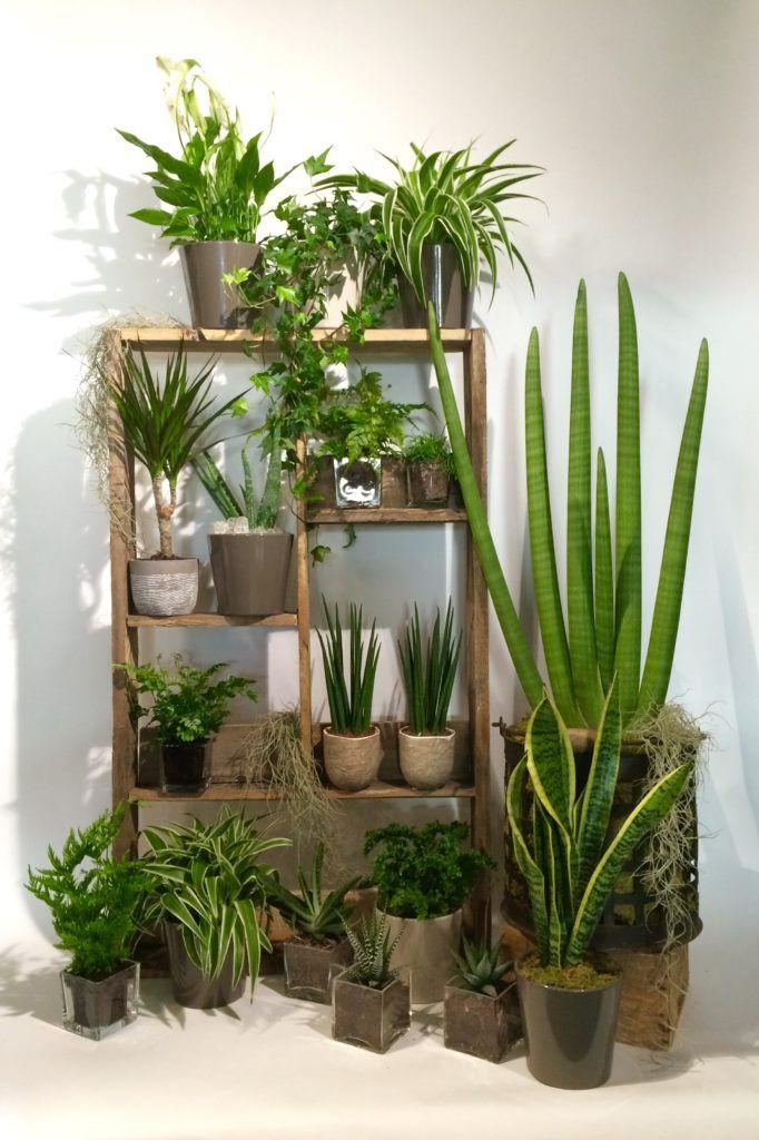 plantes détox maison