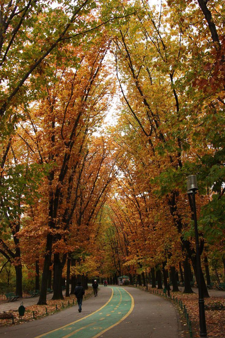 Autumn in Herăstrău Park, Bucharest, Romania.
