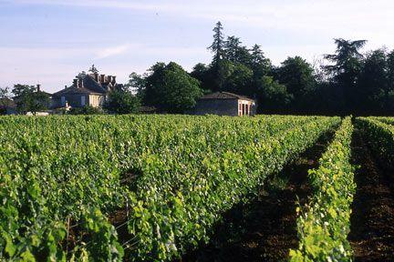 Venez à la découverte du vignoble du château Jeandeman en réservant votre visite sur Wine Tour Booking