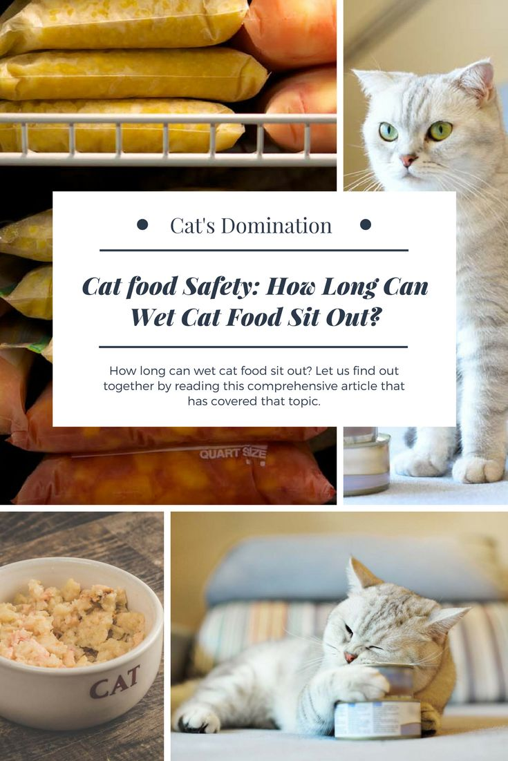 How long can wet cat food sit out? Let us find out