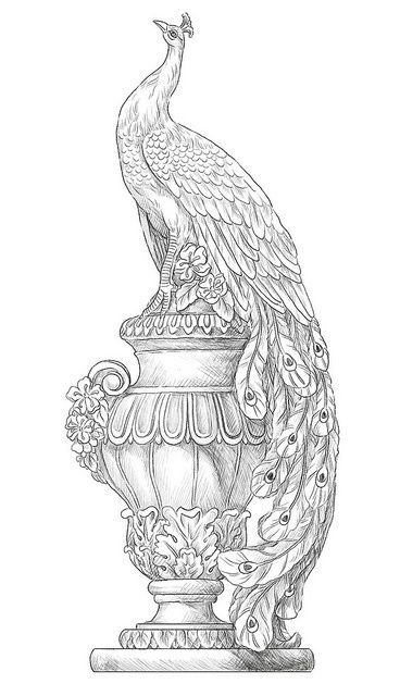 peacock coloring pages for adults free image an artist first draws a concept for the