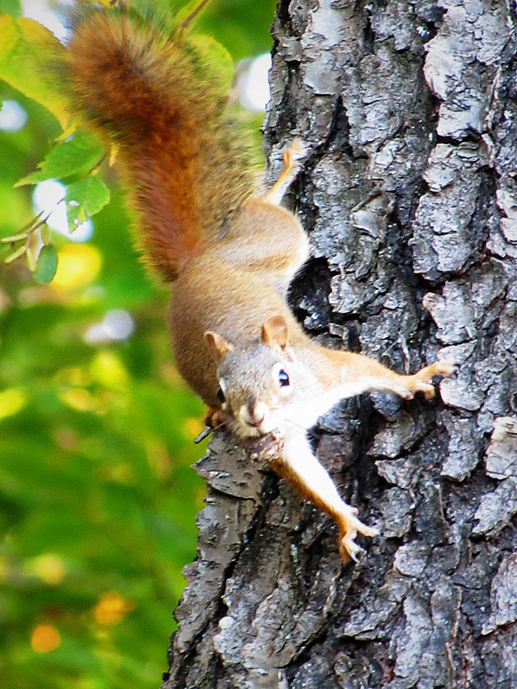 Image result for frighten squirrels scampering on trees