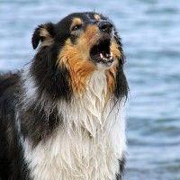 #dogalize Cane che abbaia di notte: quali sono i rimedi? #dogs #cats #pets