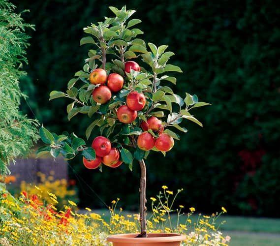 The 25+ best ideas about Dehner Pflanzen on Pinterest ...