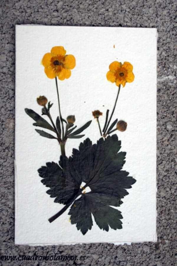 Mejores 9 imágenes de Mis láminas / My sheets en Pinterest | Arte ...
