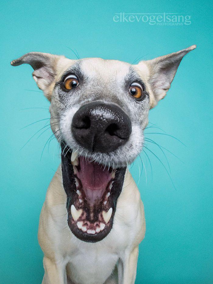 Magníficos Retratos Expresivos De Perros Por Elke Vogelsang