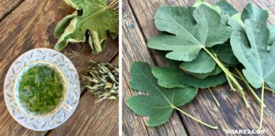 Φύλλα Συκιάς – Οι Θαυμαστές Θεραπευτικές τους Ιδιότητές που Δεν Γνωρίζαμε & Δεν μας είχε Πει Κανείς!