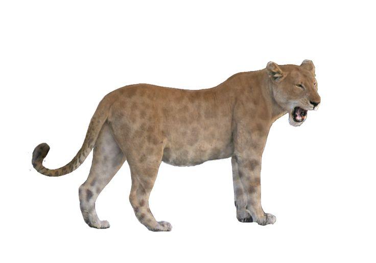 Panthera leo atrox by Jesús Gamarra