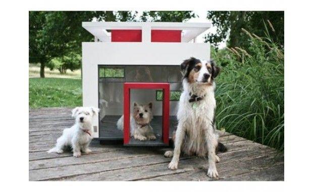 Ambiente | 7 exemplos de casas projetadas para cachorros: diferentes estilos e conceitos. | Clique Arquitetura | Seu portal de Ideias e Soluções