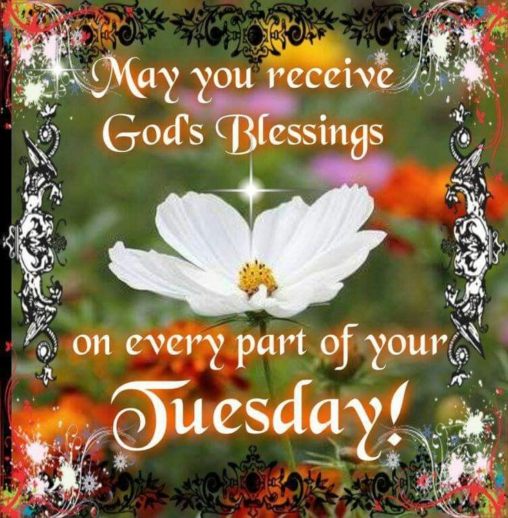 Morning Tuesday Quotes Blessings