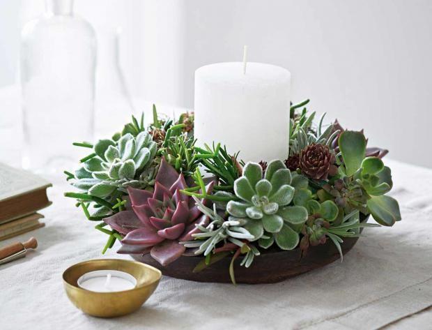 25 best ideas about sukkulenten pflege auf pinterest weihnachts kaktuspflege jade pflanzen. Black Bedroom Furniture Sets. Home Design Ideas
