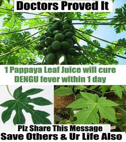 Best Natural Cure Platelets